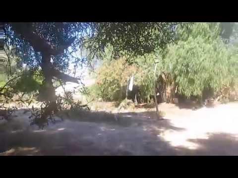 صورة فيديو – سياح يتعرفون على اقدم شجرة اركان في اقليم الصويرة يبلغ عمرها ازيد من 3 قرون
